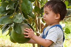 Junge mit Grapefruit